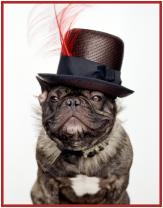 French-Bulldog-Marcel-Nars